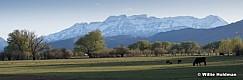 Spring Green Pasture Heber Pan050219 76254