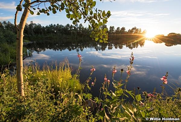 Golden Pond 0711152