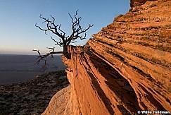 Vermillion Cliffs Tree 052316 7085