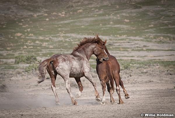 Mustang Bitting 051521 7764