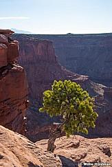 Lone Tree Shinning 031617 1064