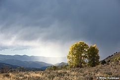 Two-Autumn-Trees-100315-3