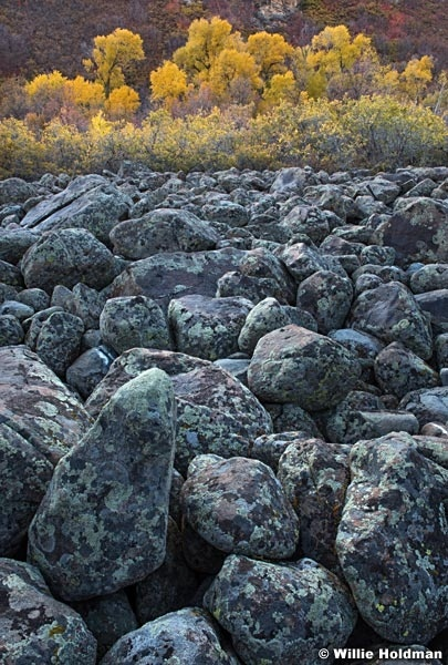 Boulders and Cottonwoods 101219 1569 41