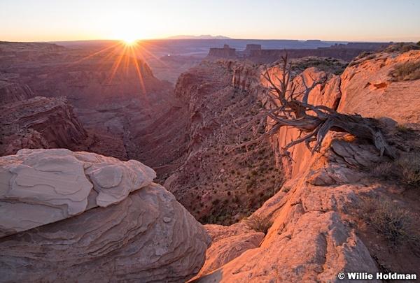 Canyonlands Overlook Tree 052618 6492