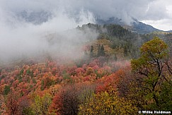 Maples Fog Wasatch 092216 5087 4
