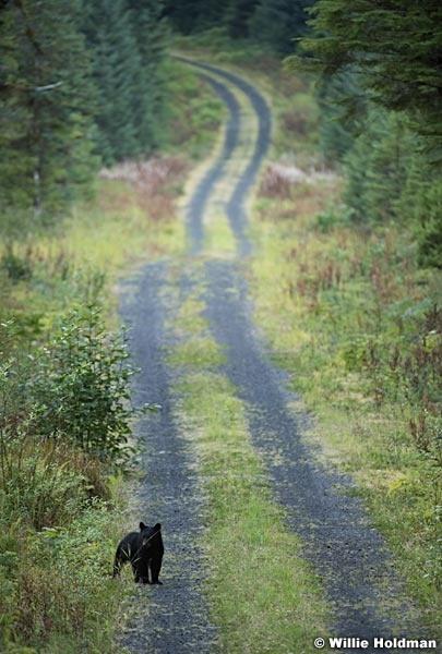 Alaska Bear Cub 081616 1763