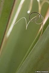 plant pods032109 13820