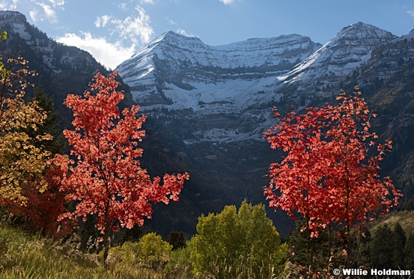 Timpanogos Snow red maples 092516 6896 3