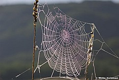 spiderweb080807 942