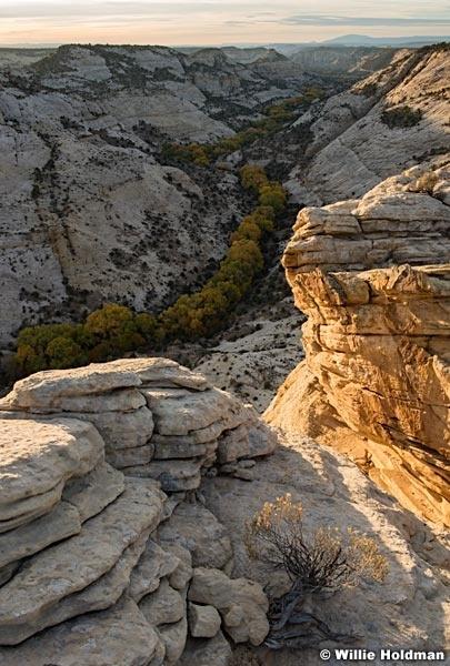 Boulder Cottonwoods 102417 3994