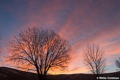 Pink Sunset with Tree 111916 5 1