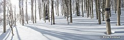 Aspen Winter Shadows 030117 7726