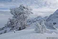 Frosty Pines Snowbasin 011217 0472