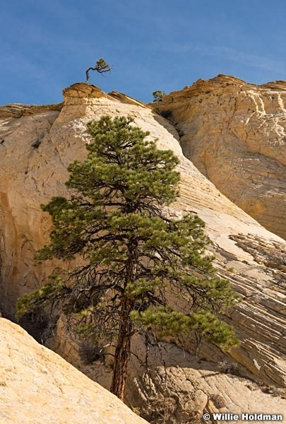 Pondersoa Boulder 101817 4229 2