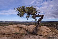 Lone Tree Desert 052415 2