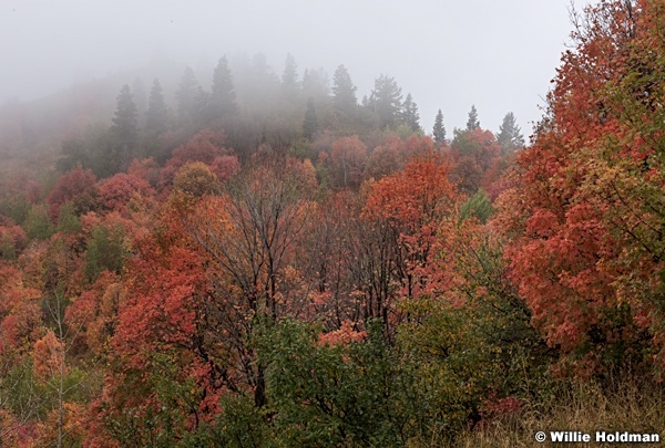 Maples Fog Wasatch 092216 5110 5