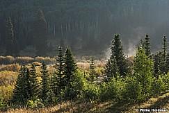 Misty Pines 082515 7