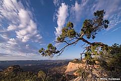 Knarley Tree Clouds 052018 3834