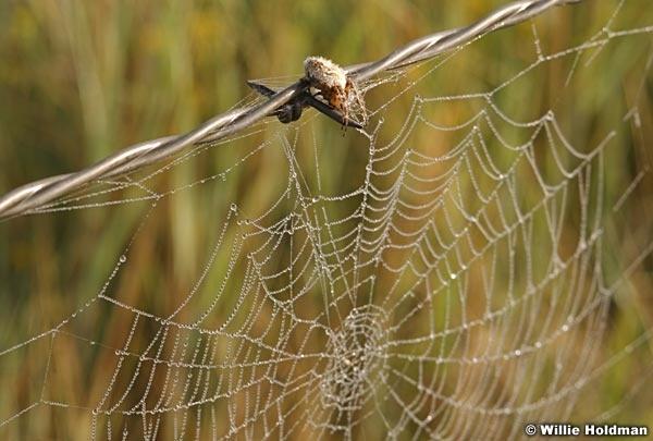 spiderweb080807 943