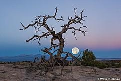 Super Moon Tree 2016
