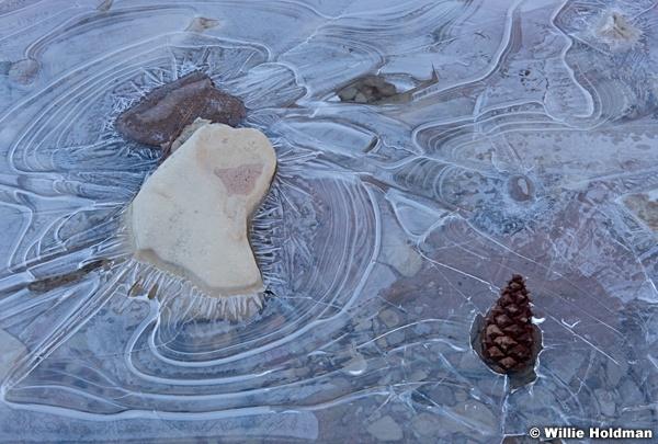 Ice Oak Leaf 021316 3204