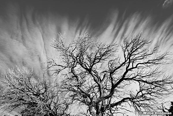 treecloudsBW1101710 29