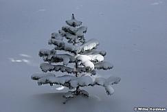 Lone Pine 030617 9247