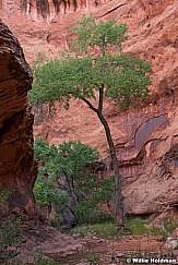 Escalante Side Canyon 060516 0852 2