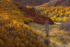 Scrub Oak Colors 101416 1