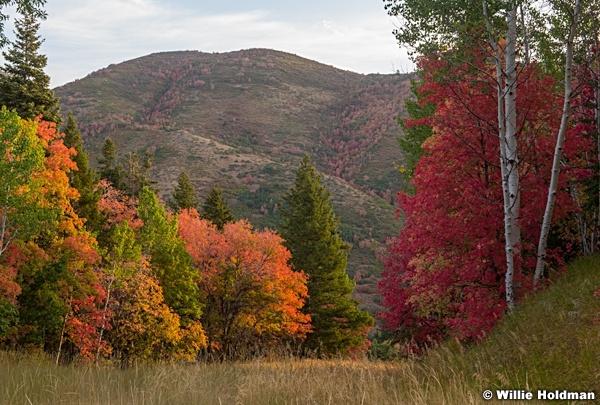 Sundance Autumn Splender 092220 0154 2