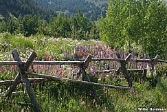 wildflowersfence071308 3237