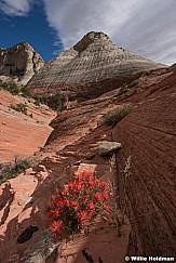 Sandstone Domes Paintbrush 042617 8904