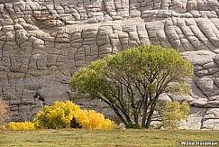 Sandstone Cottonwoods 101817 4276