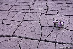 Desert Bloom 050814 8350