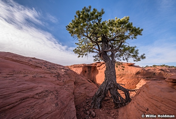 Tree Roots Red Rock 031018 4925