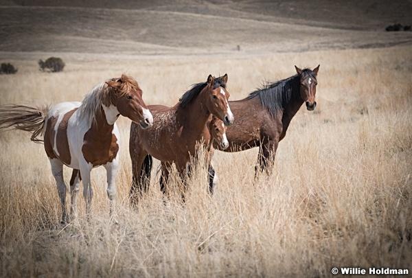 Wild Horses Paint t 040320 0949 2