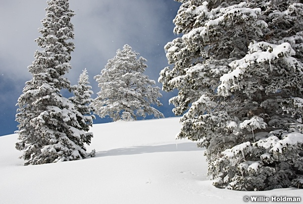 Frosty Pines 122615 8517 5