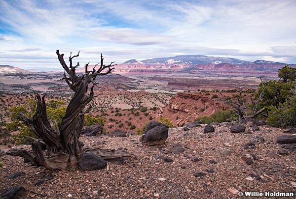 Mesa View Torrey 040618 0424